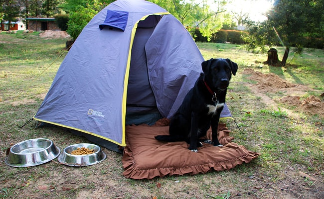 camping-pet-supplies