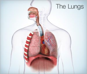 the-lungs