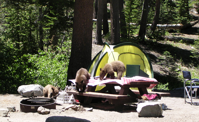 Animal-Proof-Campsite