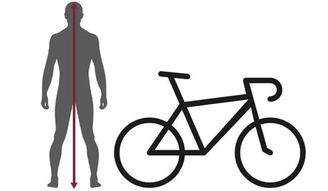 Mountain-Bikes-Sized